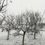 Zima - drzewa w śniegu