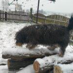 Zima - pies bawiący się na śniegu