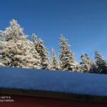 Zima widok na drzewa