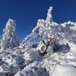 Zima w górach - widok na drzewa