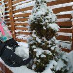 Zima - drzewko i śnieg na rękach dziecka