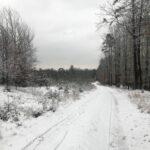 Zima w lesie - widok na drzewa