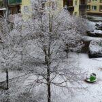 Zima widok drzewa