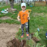 Sadzenie przez ucznia drzewka