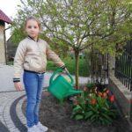 podlewanie przez uczennicę rosnących przy domu tulipanów