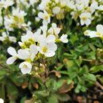 Białe kwiatuszki