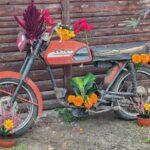 Motor i kwiaty
