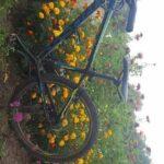Rower w kwiatach